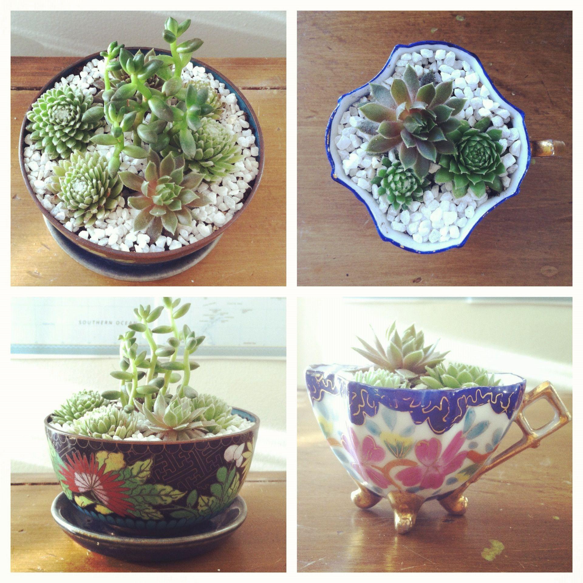 Japanese garden / koi pond cake Miniature garden