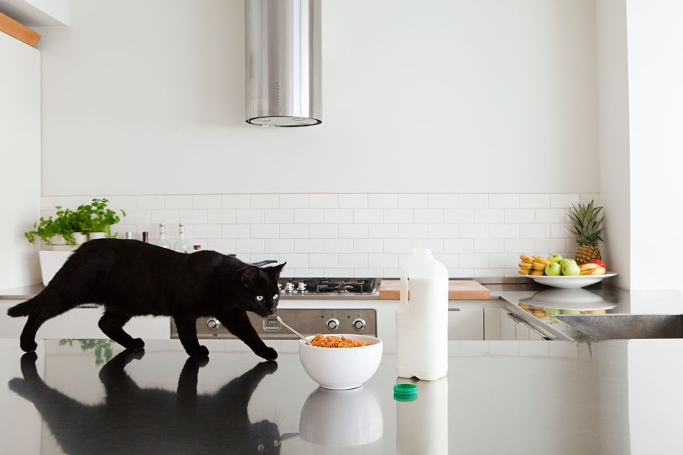 How to keep your cat off the kitchen counters cats