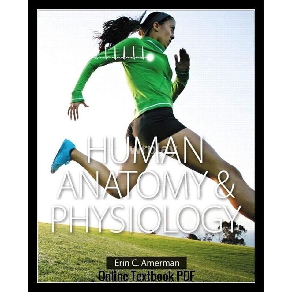 Human Anatomy & Physiology (Amerman) PDF | Human anatomy, Anatomy ...