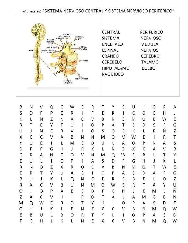Resultado de imagen para sopa de letras partes de la neurona ...
