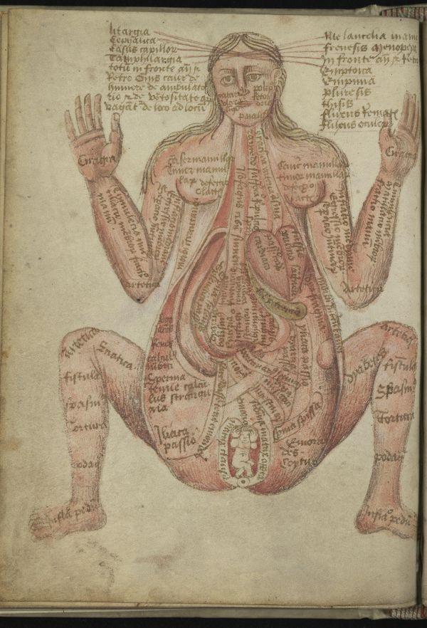 Anatomical Illustrations from 15th-century England | anatomy ...