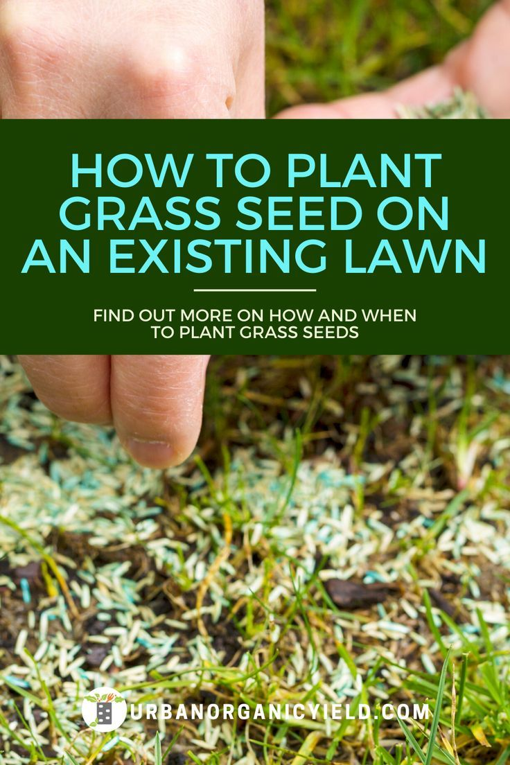 How to plant grass seeds on an existing lawn in 2020