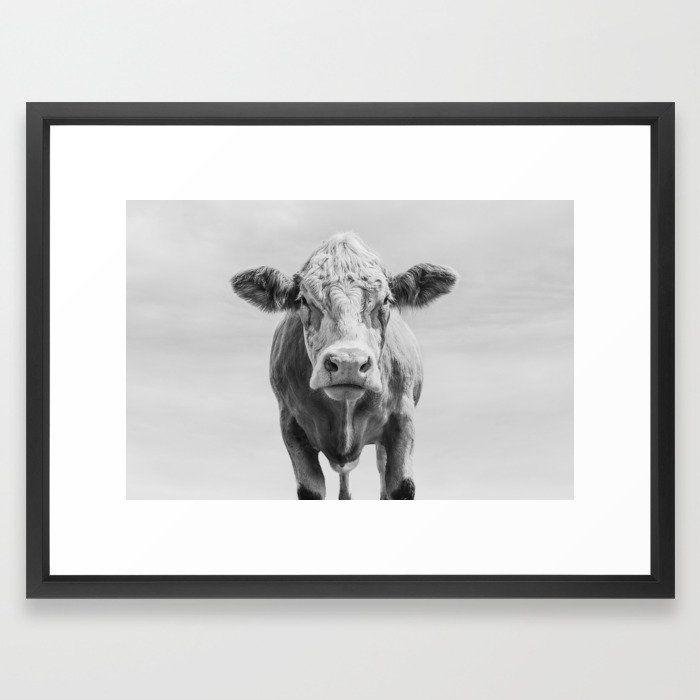 Photo of Animal Photography   Cow Portrait Minimalism   Farm animals   black and white Framed Art Print by Wildhood – Vector Black – MEDI