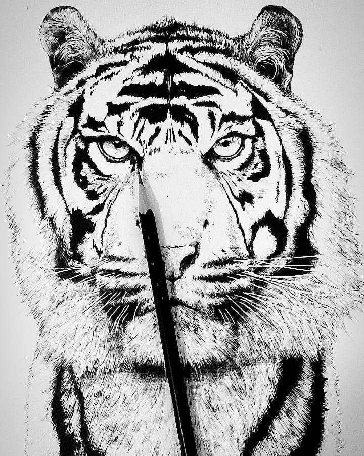 Tigre disponible para tatuar~ .  Consulta por interno 👈🏻 . . . #tiger #art #tatuajesecuador #blackwork