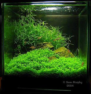... Basic Aquascaping Principles And Technique   Practical Guide To  Aquascaping   Information On How To Keep Freshwater Aquarium Plants For  Beginners