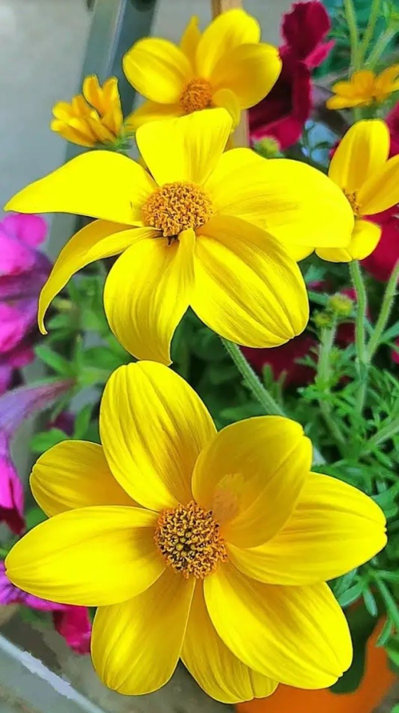 Beautiful Flower Flowers Pinterest Beautiful Flowers Flower