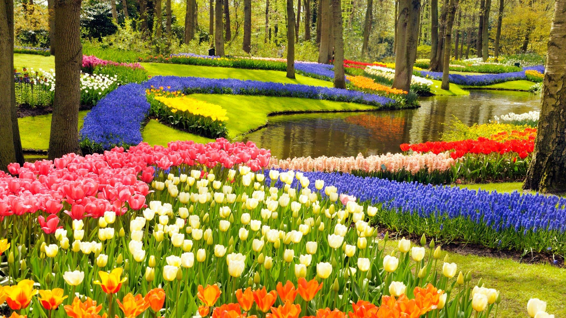 keukenhof gardens and tulip fields tour from amsterdam | i love