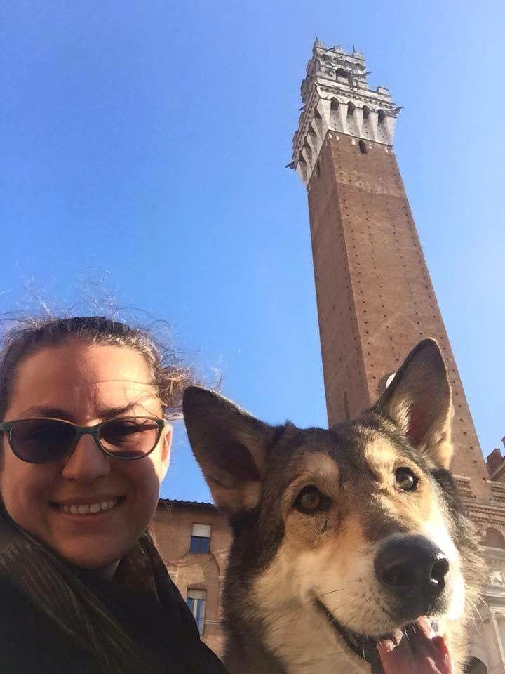 """A spasso per le meraviglie di Siena, con """"Prima Lupa di Fossombrone""""....  #Saarlooswolfhond #DiFossombrone"""