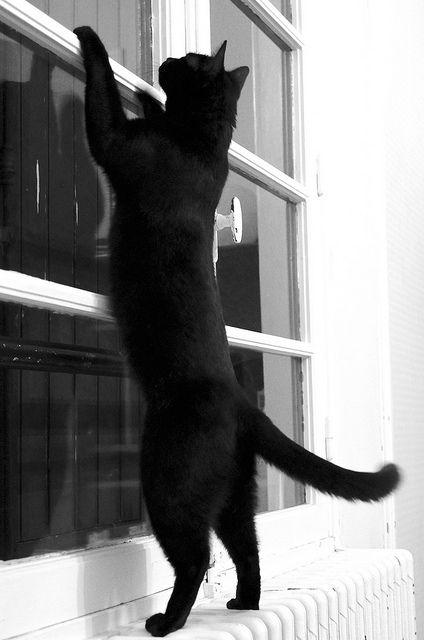 Ona jej čierna mačička