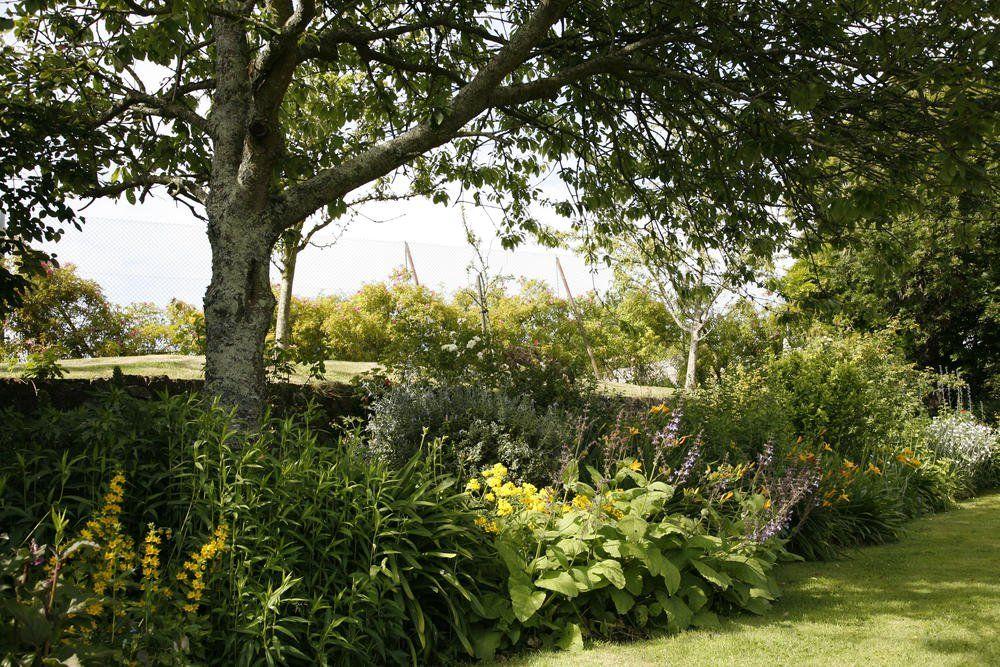 Grenzabstand Fur Baume Straucher Und Hecken Beachten Bepflanzung Hecke Schattengarten
