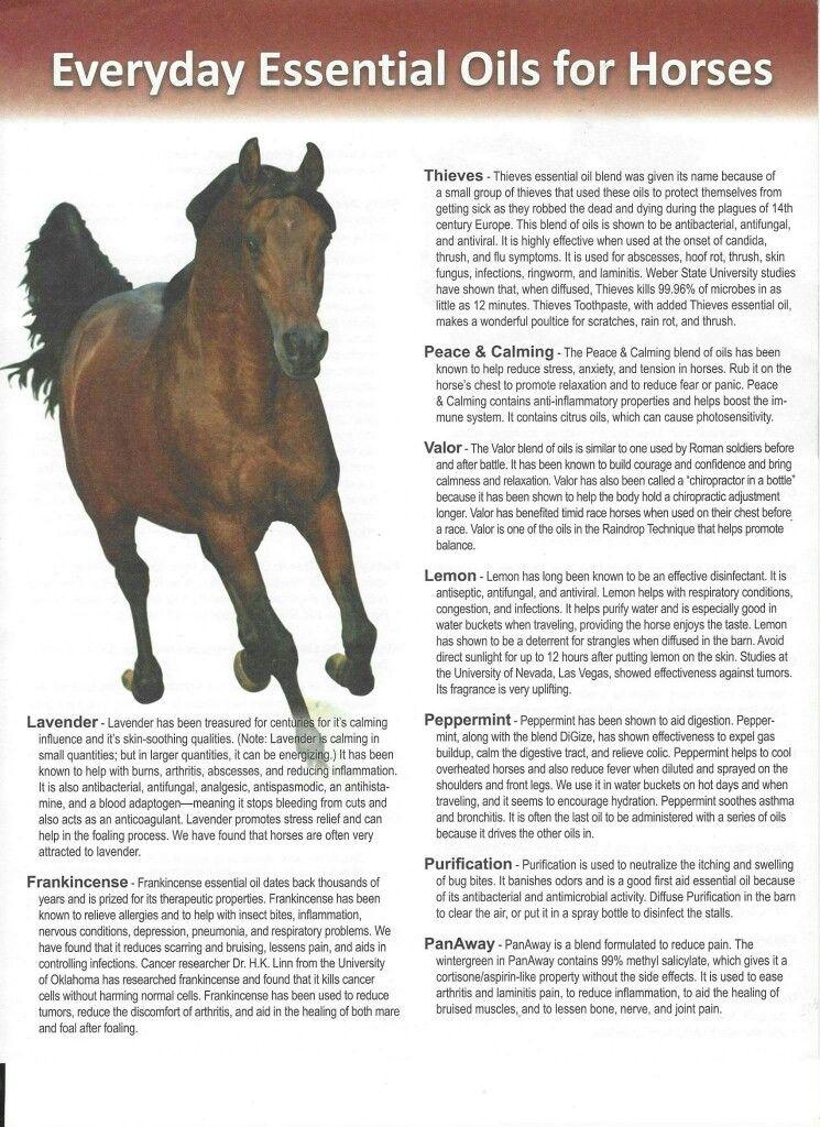 Reflexology for horses
