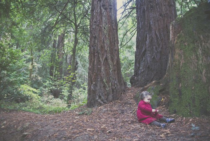 our family road trip to the redwoods! | Wildflowers Photography