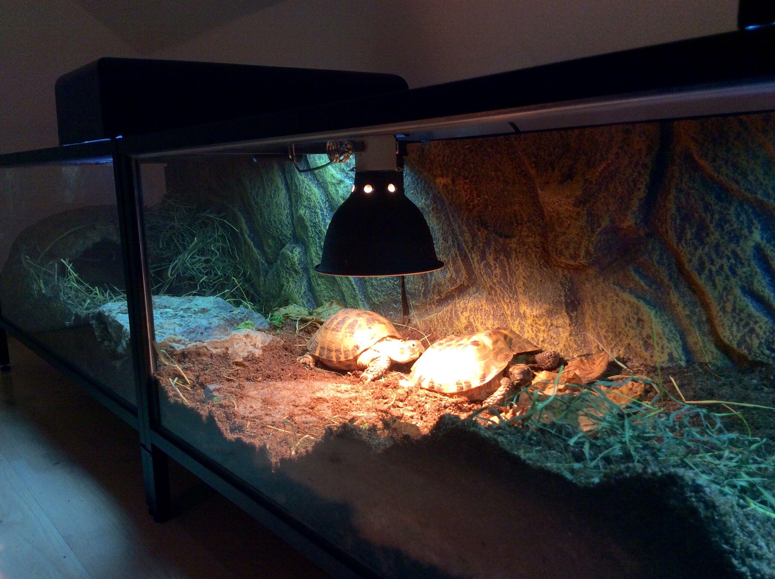 Four meters long tortoise terrarium made of ikea vittsjötables