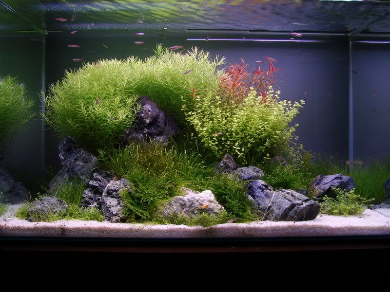 Ada 60p tank with seiryu seki stones aquascape for Ada fish tank