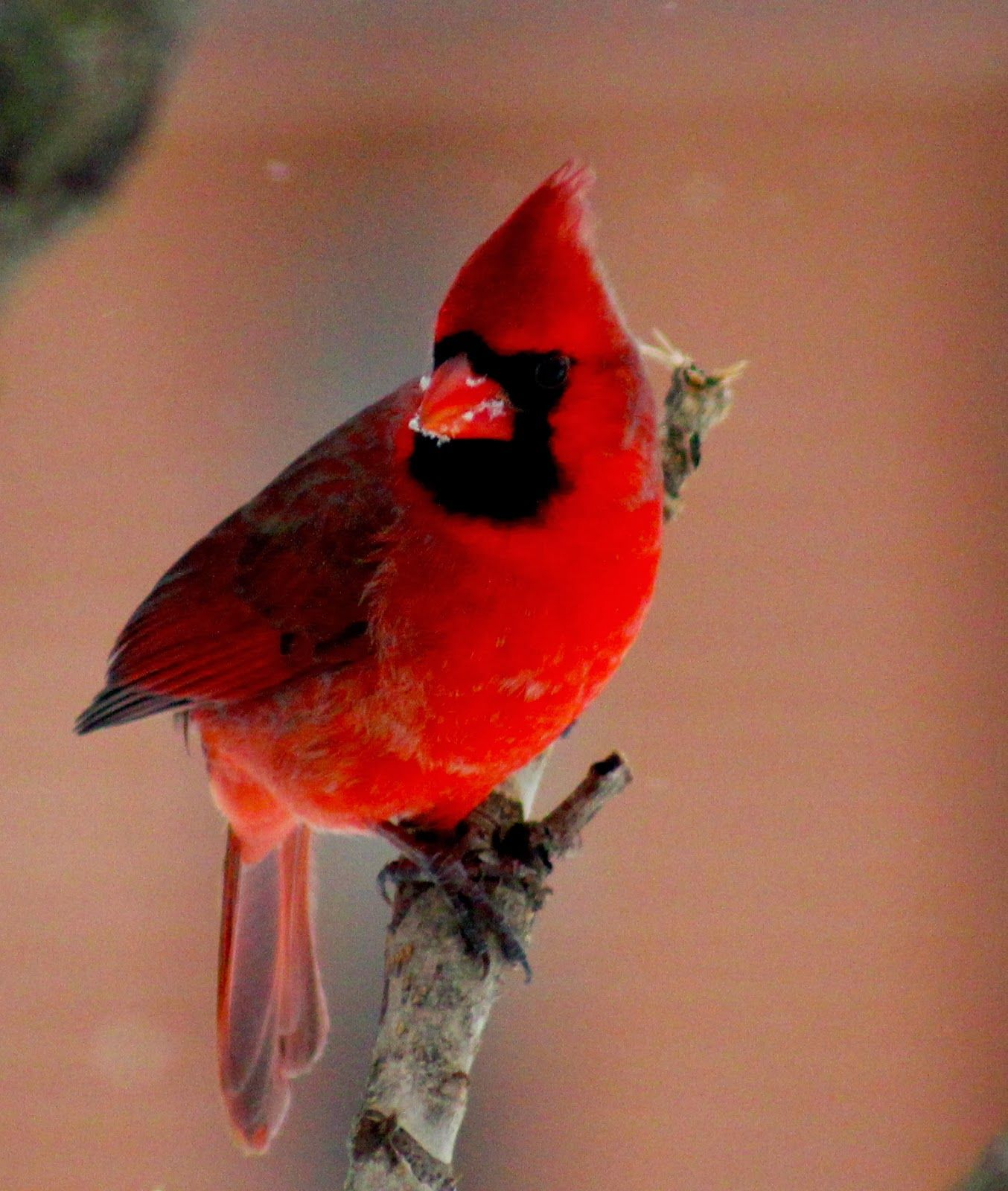 New House: Don't Forget The Birds - Tips for Winter Feeding