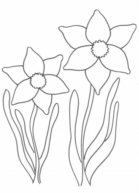 narcis kleurplaten knutselen thema lente narcissen