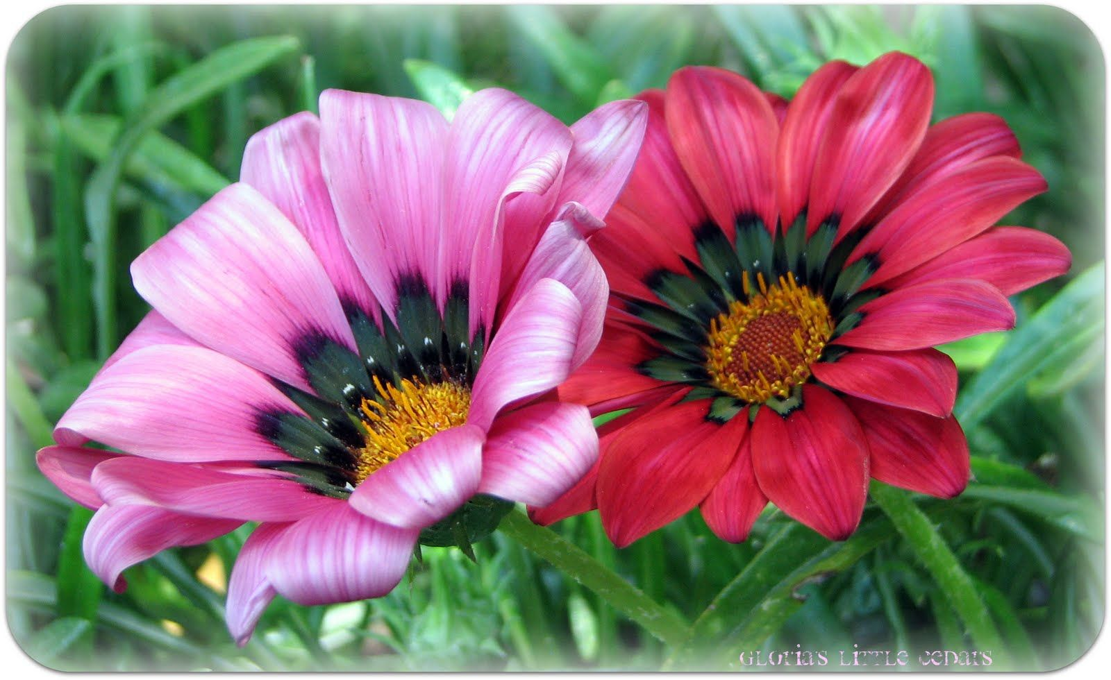 realistic flower drawing - Google Search | Drawing | Pinterest ...