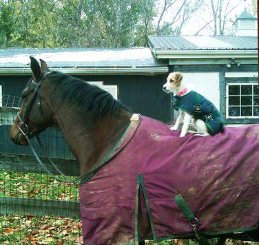 Denya Dee Leake Was Preparing To Exercise Her Field Hunter