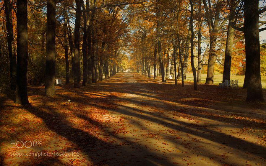 autumn park by leskovleo