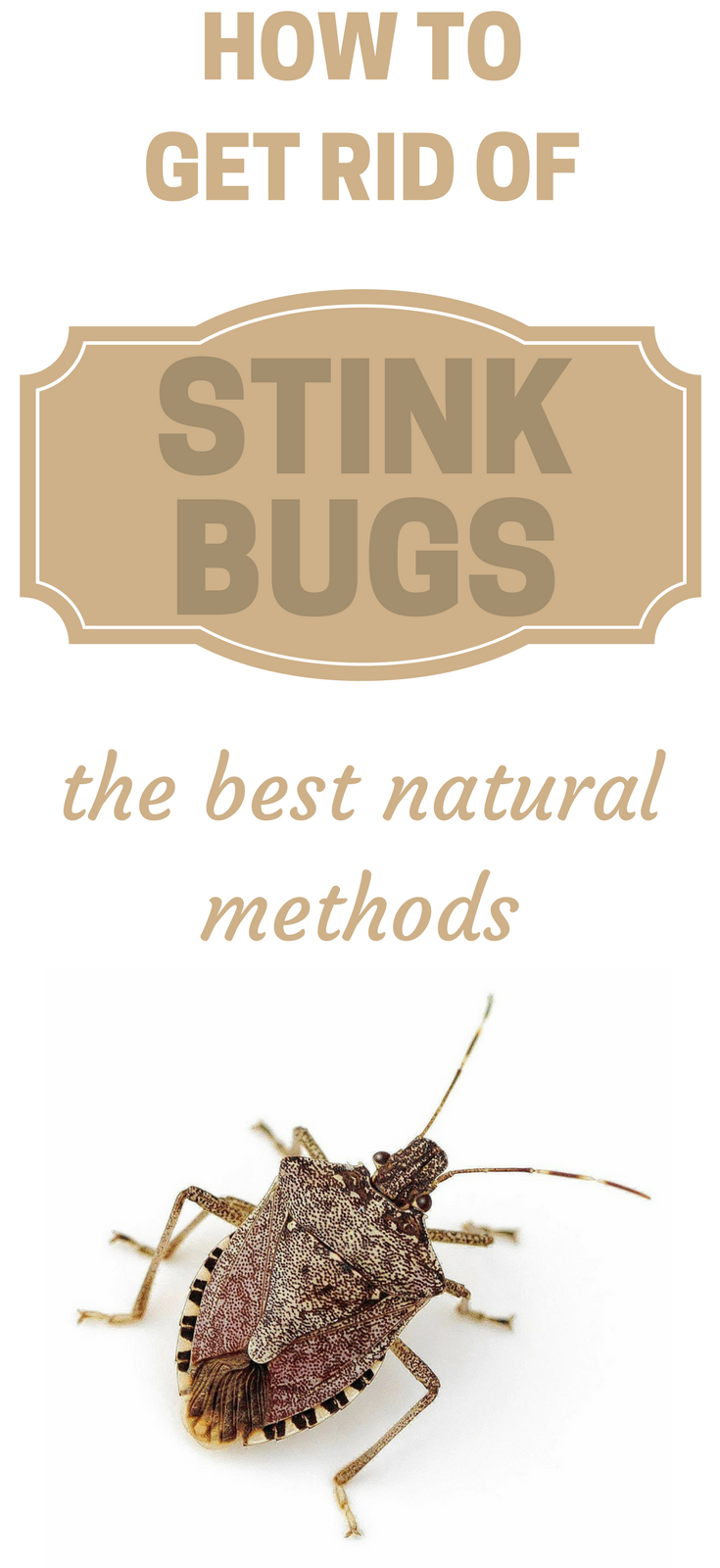 how-to-get-rid-of-stink-bugs-the-best-natural-methods | Garden ...