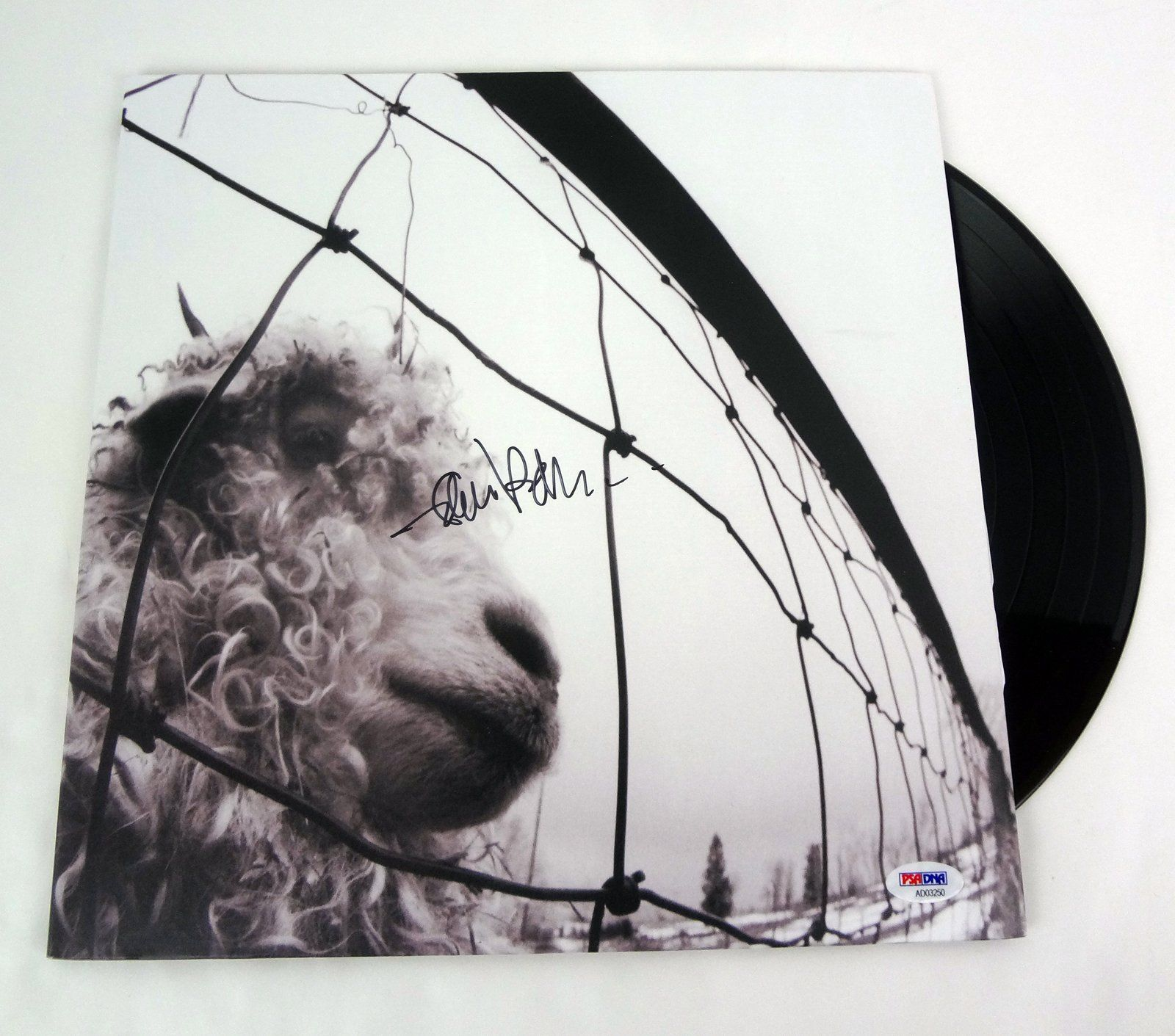 Eddie Vedder Pearl Jam Signed Autograph Vs Vinyl Record Album Psa Dna Coa Find Out More About The Great Product At Th With Images Vinyl Record Album Vinyl Records Vinyl