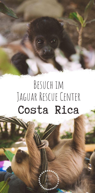 Tiere retten Das Jaguar Rescue Center in Costa Rica  Itchy Feet Unweit von Puerto Viejo zwischen Cocles und Playa Chiquita liegt das Jaguar Rescue Center Ein Zentrum zur...