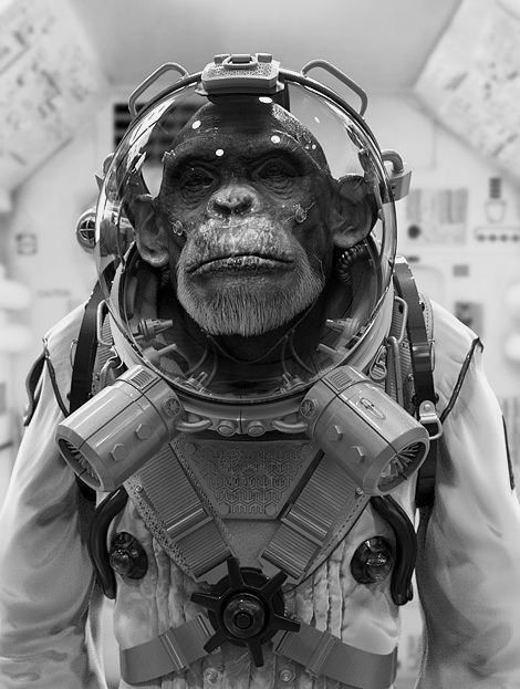 A space monkey... | Monkey in space, Astronaut artwork, Monkey art