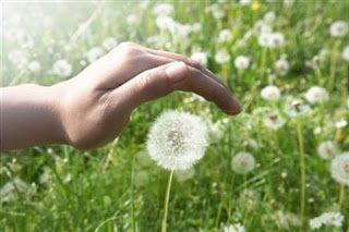 Algunos aspectos generales de las hierbas y #plantasmedicinales