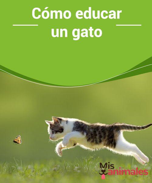 Cómo #educar un gato Los gatos pueden ser complejos, así que te damos algunos #consejos sobre cómo educar un #gato.