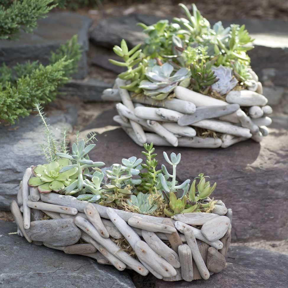 Driftwood succulent garden garden basket succulents Driftwood sculptures for garden