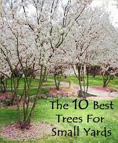 Here Is A Look Into What Might Be Good For A Smaller Yard These Trees Are Really Pretty Theyre P Backyard Landscaping Front Yard Landscaping Yard Landscaping