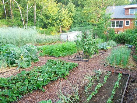 This was what the one acre looked like when the property was purchased raised beds were for Wood chip mulch vegetable garden