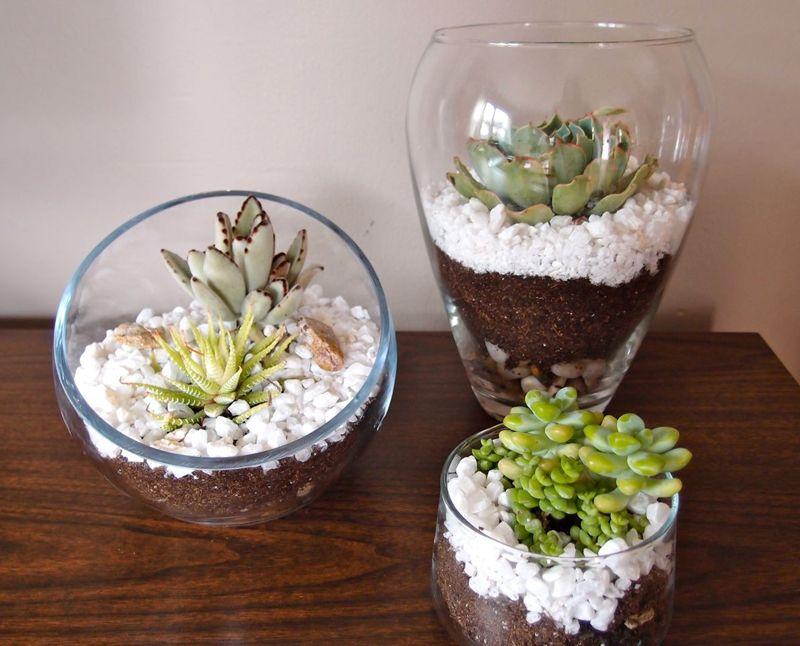 I had an old small glass jar that i wrapped twine around - Plantas para terrarios ...