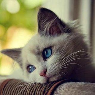#Cute #little #bored #cat #lying #around. . . #catsofinstagram #catstagram #kitty #cutekittens #cutecats #cats #kittens #kitten