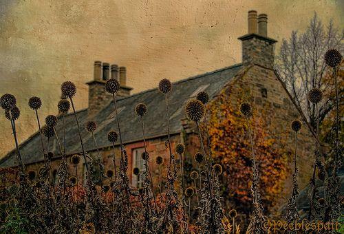 Overgrown yard and abandoned house, the Scottish Borders, Scotland