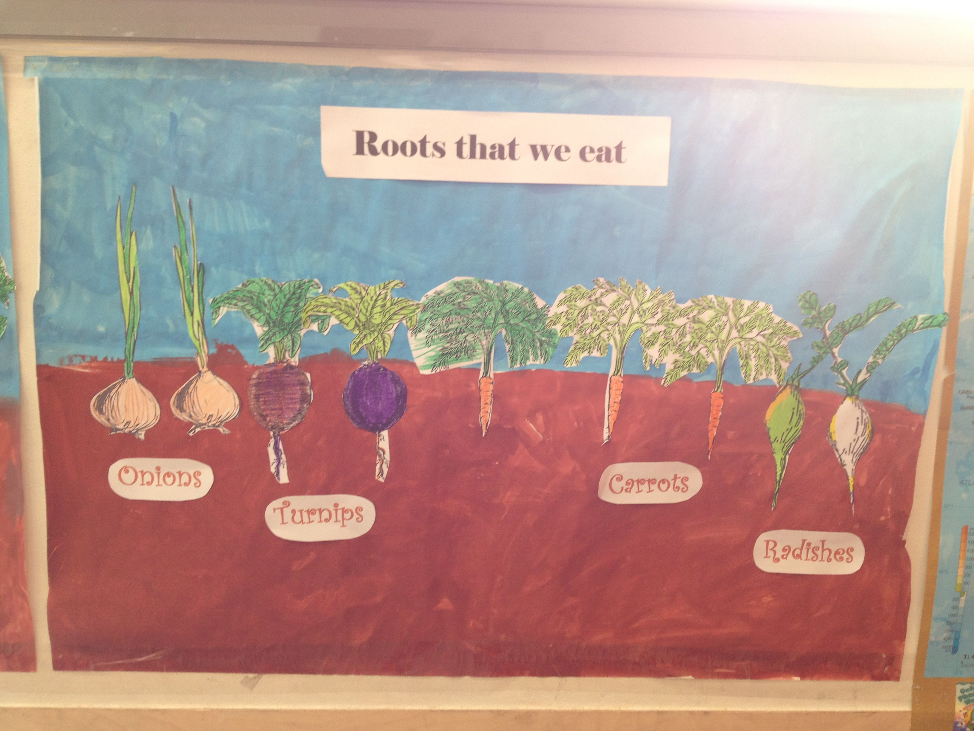 We Made Posters To Show The Parts Of A Plant We Can Eat