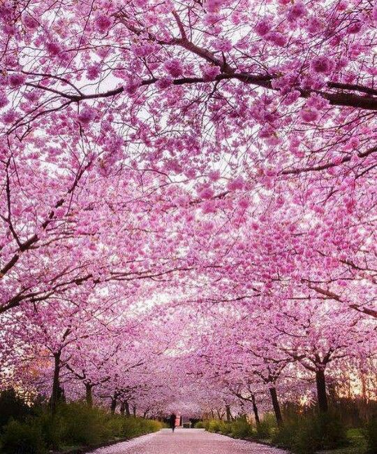 Pin By Katerina Ioannou On A Beautiful Spring Nature Inspiration Instagram Cherry Blossom