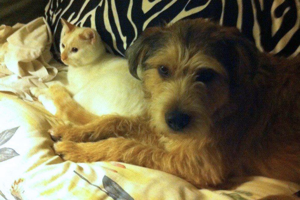 Remember Me Thursday Pet Adoption Awareness Campaign Lightforpets Pet Adoption Pets Adoption Awareness