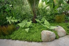 Image Result For Nz Native Garden Designs With Images Native Garden Garden Landscape Design Tropical Garden