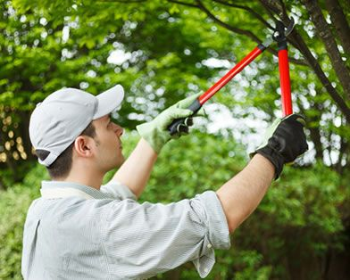 Pruning trees Padua working with professional worker with reasonable price..