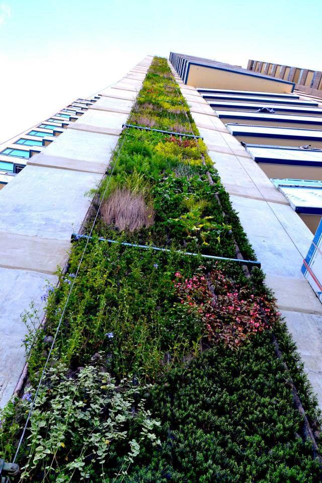 El 2do muro vivo m s alto del mundo est en latinoam rica for Techos verdes y jardines verticales