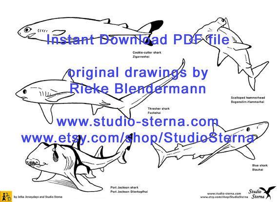Shark drawing instant download PDF Hammerhead Great White Blue zebra ...