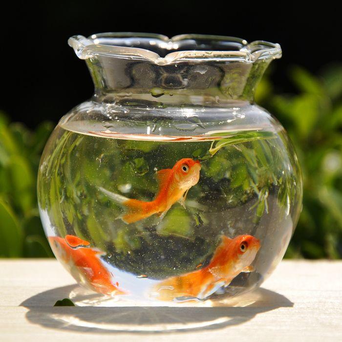 Goldfish Bowl Decoration Ideas Pinminh Trang On Fish Tanks Collection  Pinterest  Fish Tanks