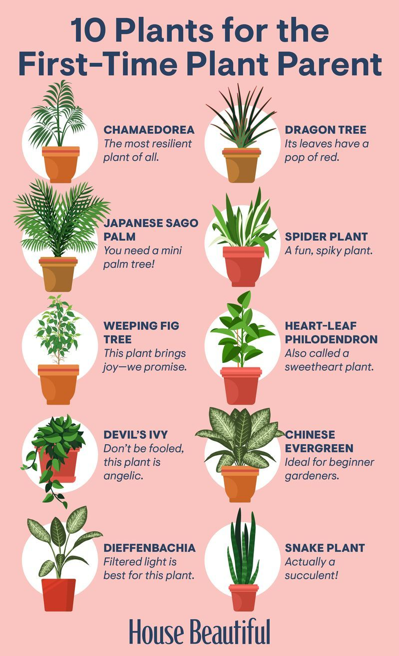 Houseplants That Are Perfect For Gardening Beginners 400 x 300