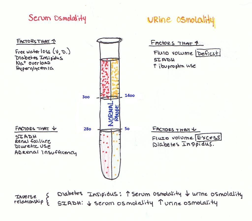 osmolality | it is, ranges and serum, Skeleton