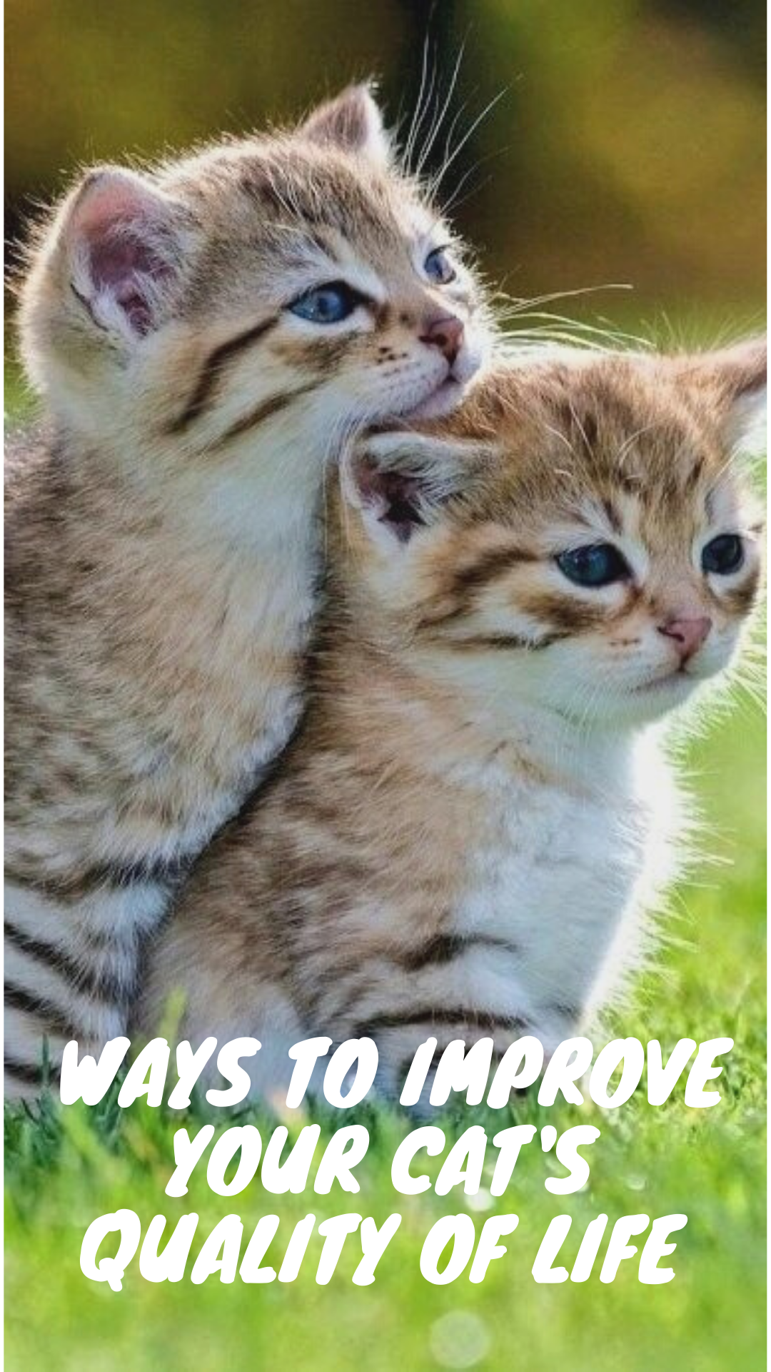 Enriching Your Cat S Life Cat Life Funny Cats Cute Cats