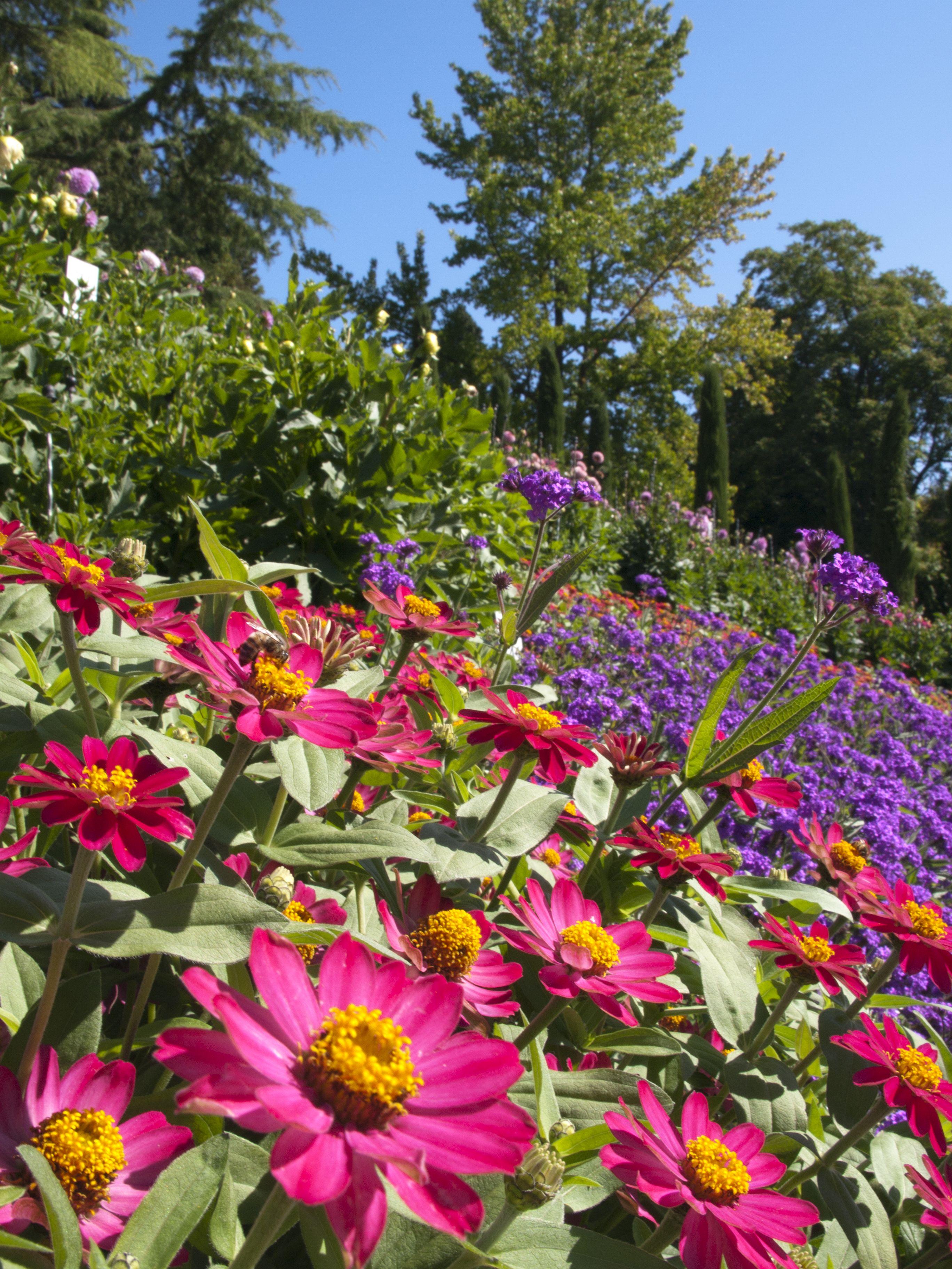 Ein Blumenmeer Auf Der Insel Mainau Im Sommer Am Bodensee Insel Mainau Englischer Garten Gartenbedarf