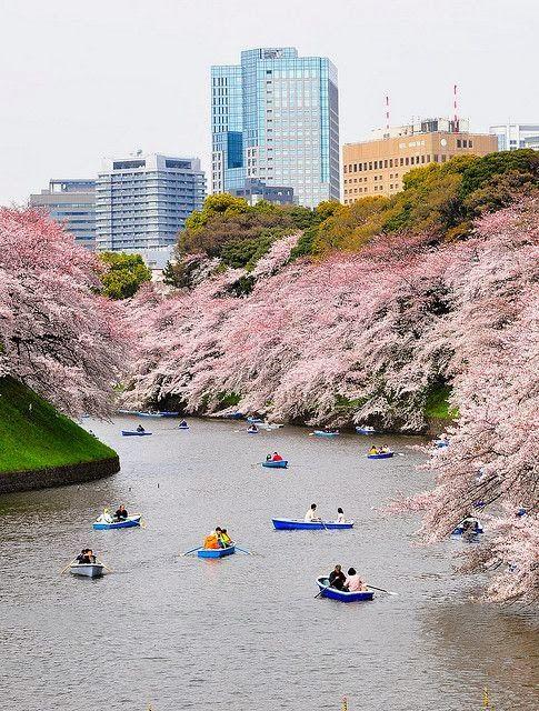 Beautiful Tokyo, Japan