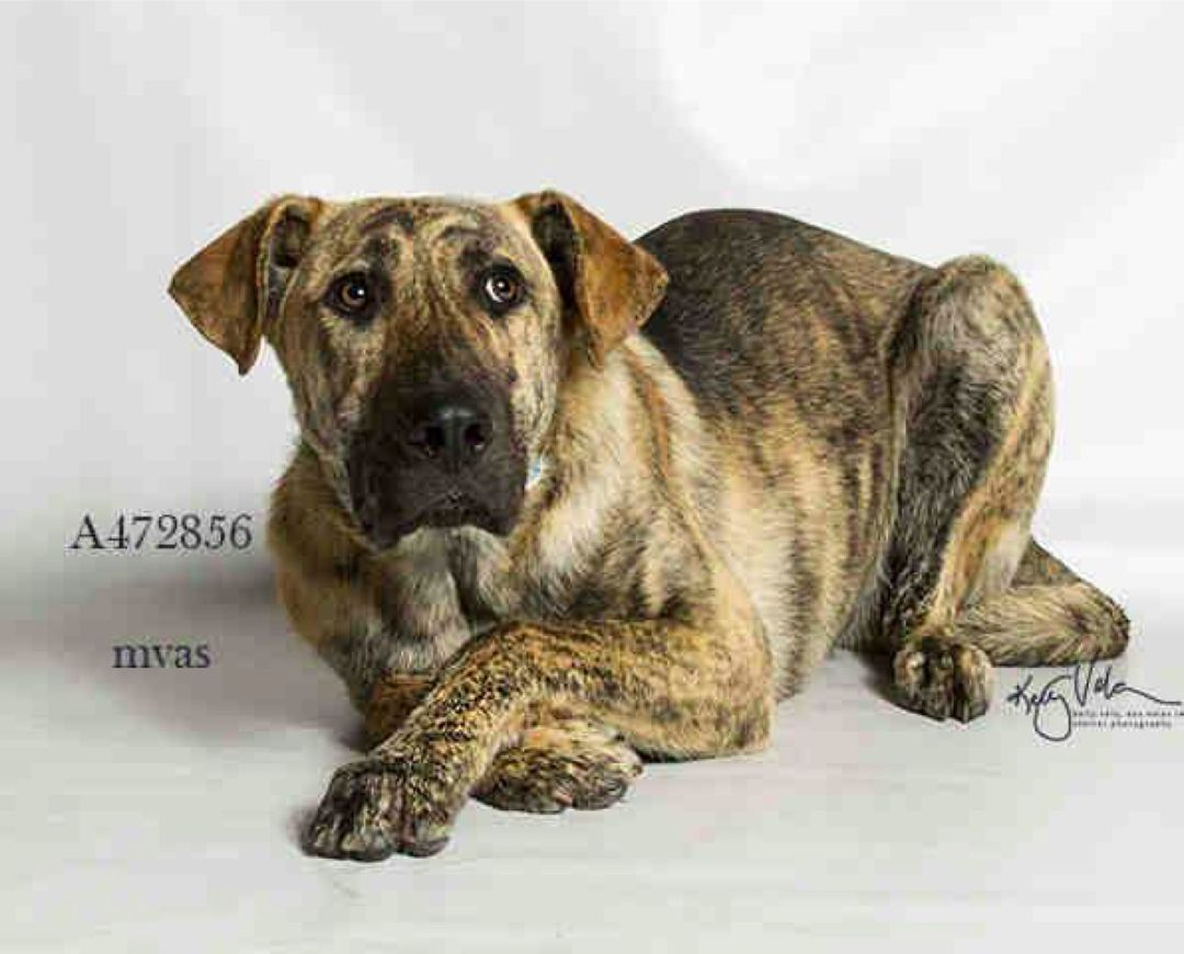 Adoption Return 5 16 17 Becomes Urgent At Risk After May 9th