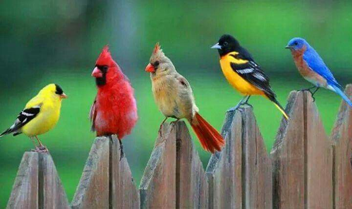 My favorite birds all in a row!